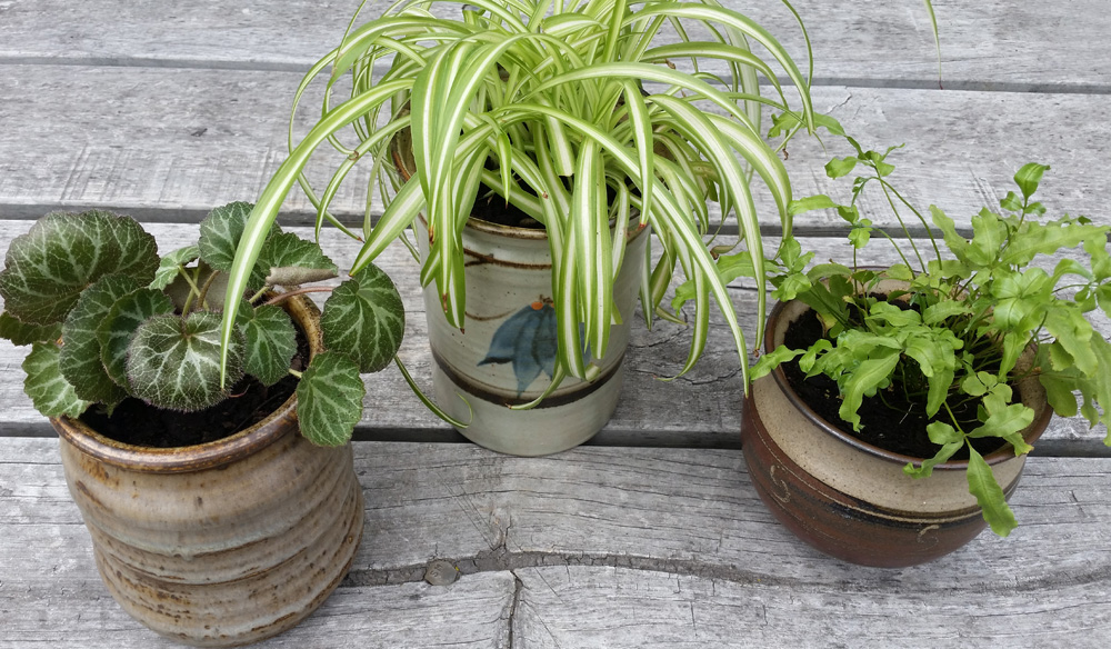 DIY PROJECT | Upcylced Ceramic Jars to Plant Pots