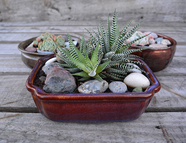 DIY PROJECT | Succulent Bowl
