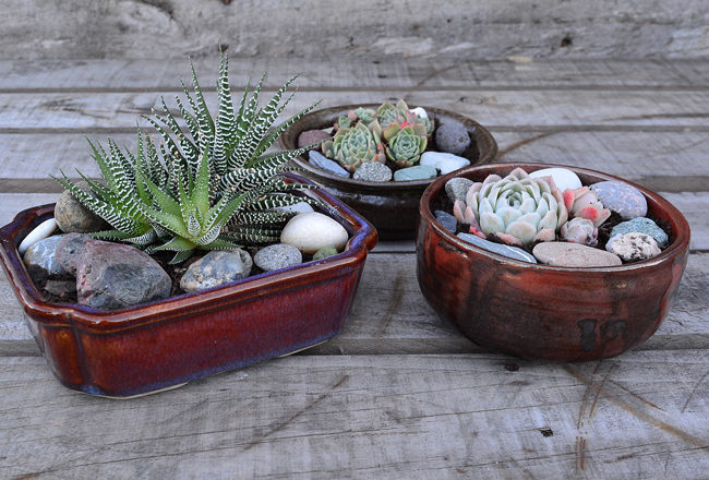 DIY PROJECT _Succulent Bowl_Featured (1)_(3)
